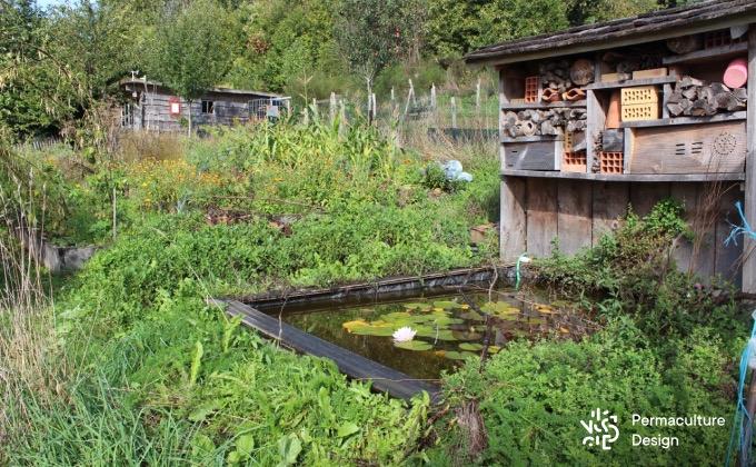 Exemple d'éléments fortement attracteurs de biodiversité au jardin : un hôtel à insectes surplombant un petit bassin entouré de plantes sauvages en plein cœur du potager en permaculture de la ferme expérimentale de la Goursaline.