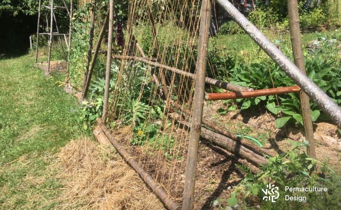 Exemple de structures en bois de châtaignier au potager en permaculture de la ferme de la Goursaline pour faire grimper notamment des haricots rames.