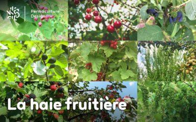 La haie fruitière comestible en permaculture
