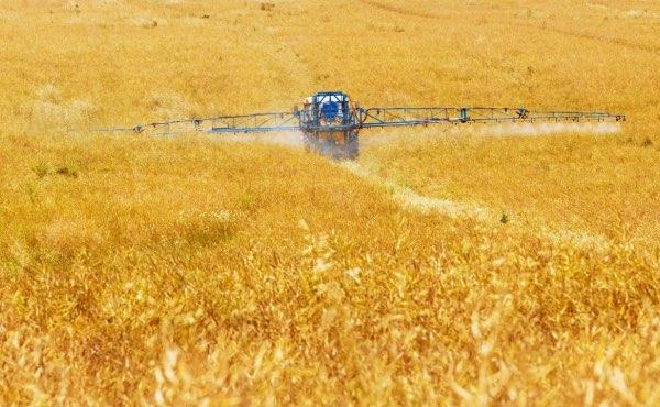 Application de produits chimiques sur un champ de céréales en monoculture.