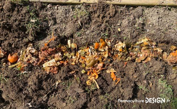Ici, le contenu fermenté d'un composteur Bokashi est mis dans une tranchée de terre où il restera pour enrichir le sol en vu de futures plantations.