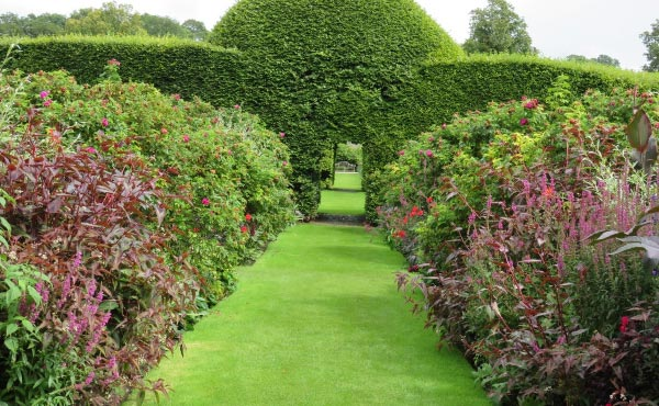 Exemple de haie persistante utilisée pour structurer un jardin et mettre en valeur les plantations fleuries en amont.
