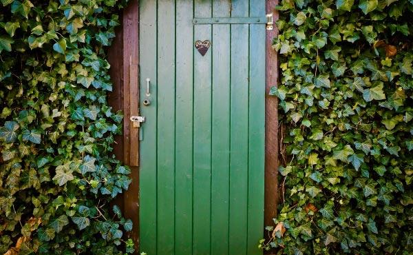 Maintenant que vous connaissez mieux le lierre et ses nombreux atouts, n'hésitez-plus à lui ouvrir la porte de votre jardin en permaculture ;) !