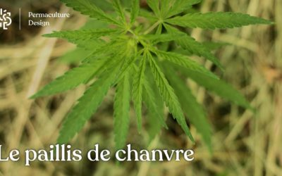 Paillis de chanvre : un paillage alternatif