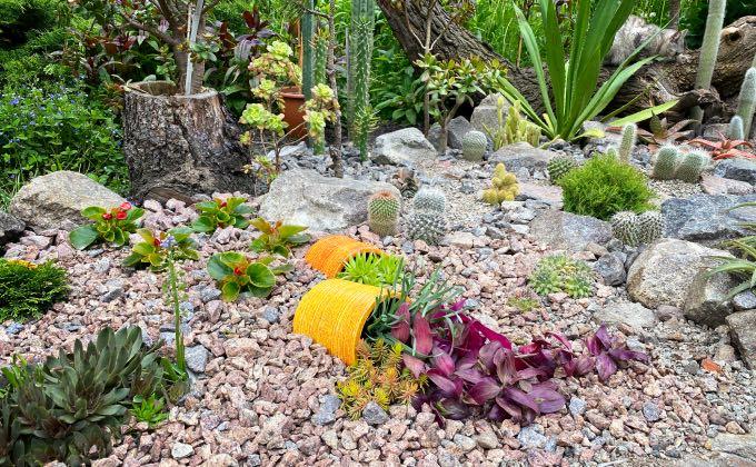 Zone de jardin avec paillage minéral de graviers divers, idéal notamment pour les plantes grasses aussi appelées succulentes.