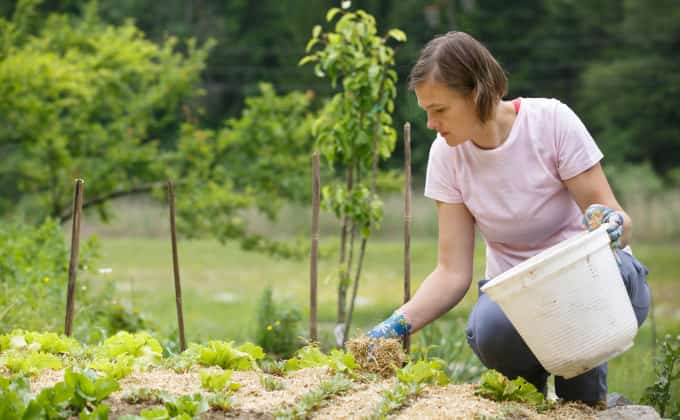 Le paillis de lin, très léger, est facile à manipuler et à installer minutieusement au jardin !