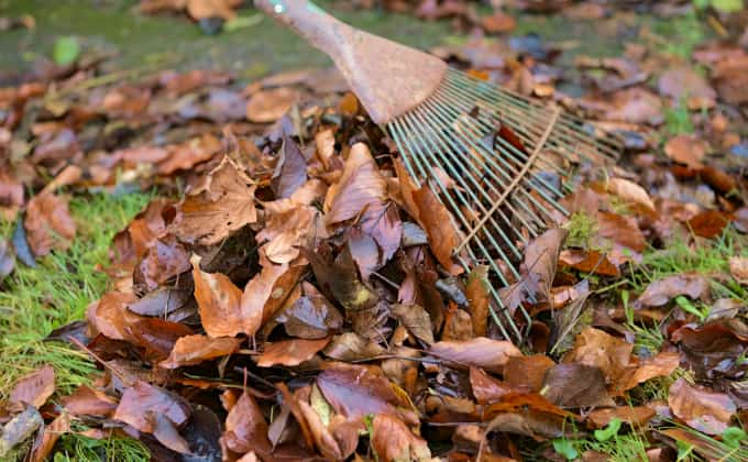 Quand on se met à observer son site et ses alentours, on se rend compte que de nombreux «déchets» sont en fait de super ressources pour pailler ou mulcher le sol de notre jardin !!