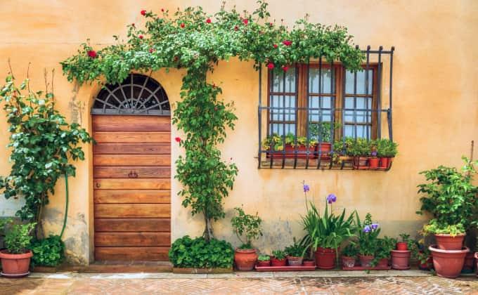 Lorsque les plantes grimpantes sont au pied d'un mur avec peu d'espace de sol pour les racines, il vaut mieux prévoir des amendements réguliers pour les maintenir en bonne santé !