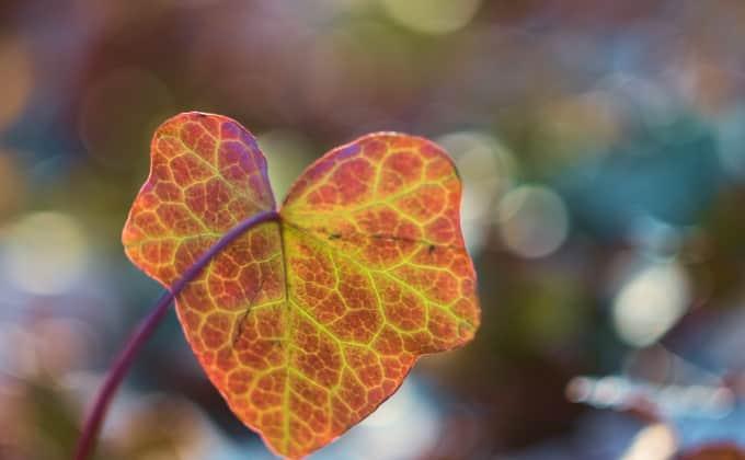 Les diverses nuances de couleurs des nombreux cultivars de lierre permettent de créer des décors végétaux très graphiques et originaux !