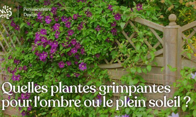 Quelles plantes grimpantes pour une exposition à l'ombre ou au soleil