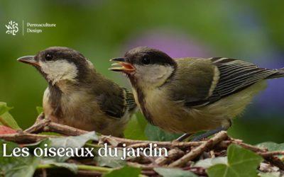 Observation et accueil des oiseaux du jardin